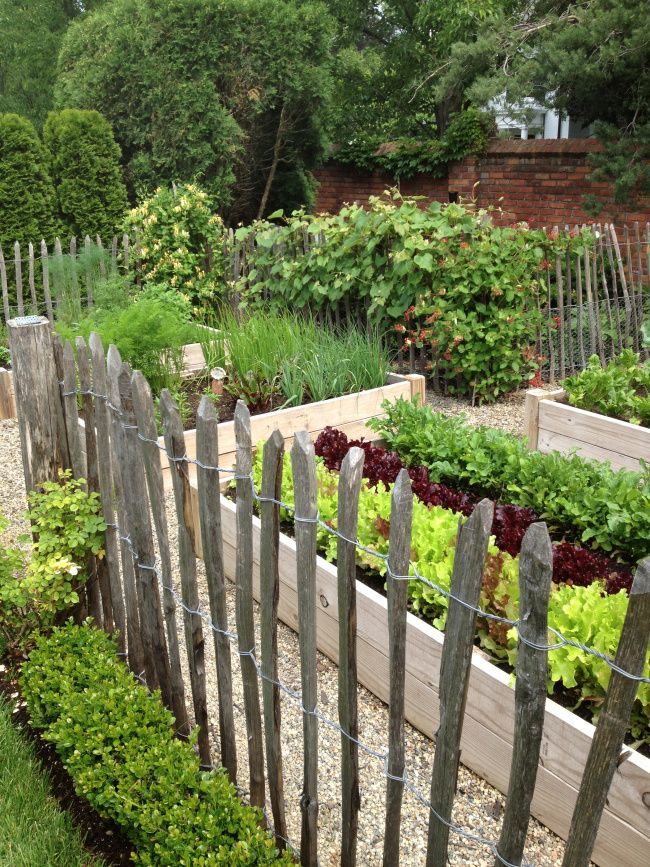 rustic fence boxwood hedge garden design pinterest on backyard fence landscaping id=95107