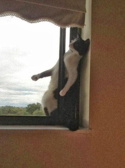 Cat burglar, strikes again!
