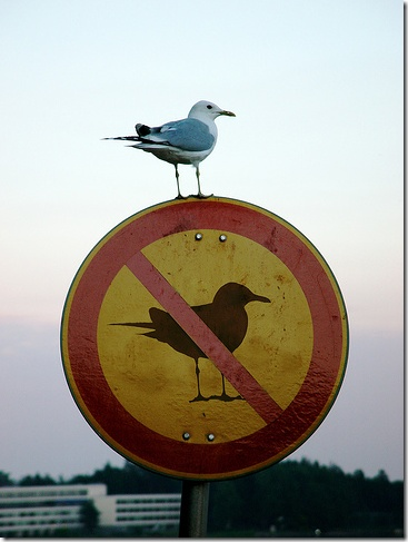 Because it's Monday - Bird not playing by the rules.