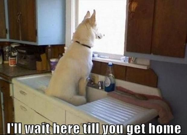 funny animal pictures, dumpaday (3). I Now that's a training issue.