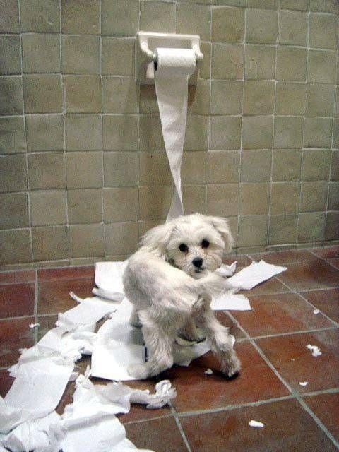 pets  | Funny pets behaving badly | Verybadfrog.com