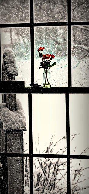 Simple Sweetness, Winter Beauty !!