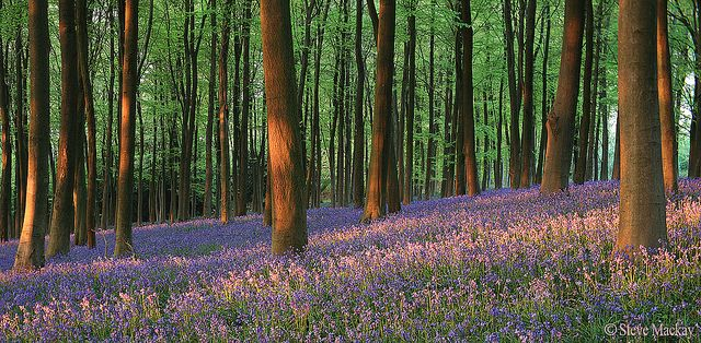 Bluebell Sunset | Flickr - Photo Sharing!