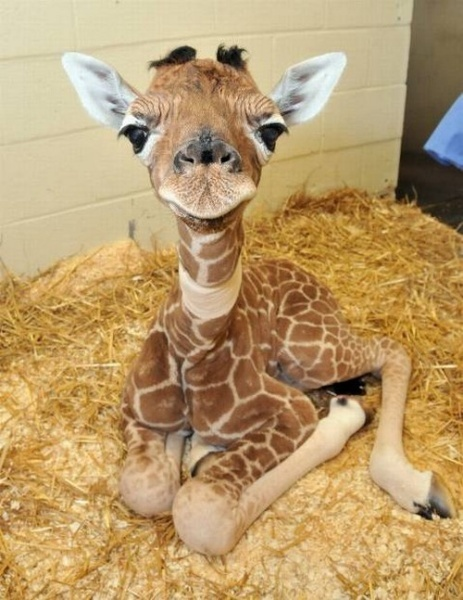 seriously though, my dream pet is a miniature giraffe that would grow up!