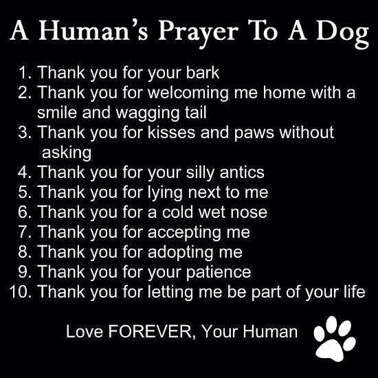 Image result for A Prayer for Your Dog