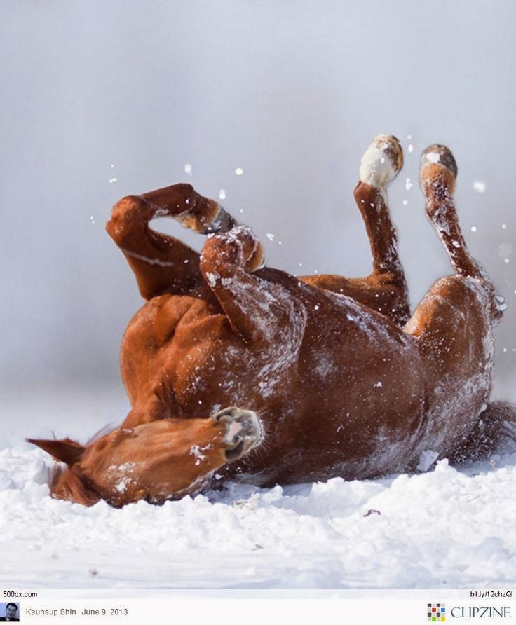 Horse Playing In The Snow Horse Horse Horse Pinterest