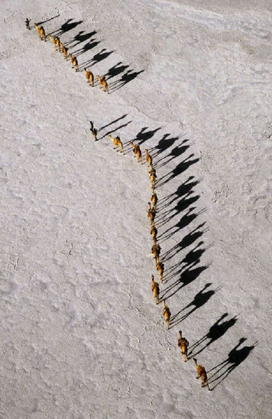Camel caravan crossing the salt flats of Lake Assal, Djibouti, Africa. (Photographer Nigel Pavitt, © John Warburton-Lee)