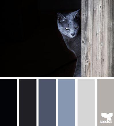 cat tones