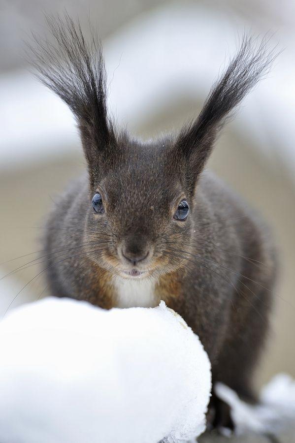 Squirrel Pics Stuck Funny