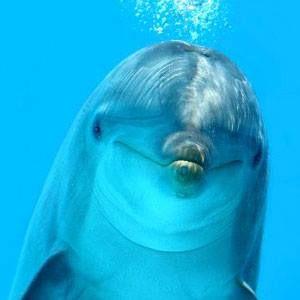 dolphin cute!
