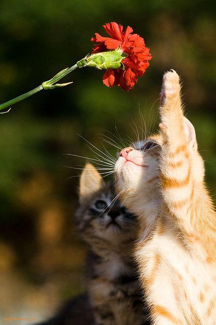 so cute.  #cat
