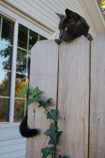 I knew ivy grew on walls, but cat tails?