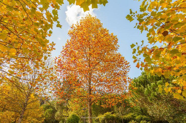 Autumn by armando tavares on 500px
