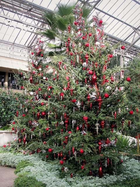 A Longwood Christmas at Longwood Gardens
