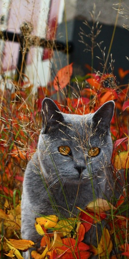 Autumn cat by Ajsha Letic