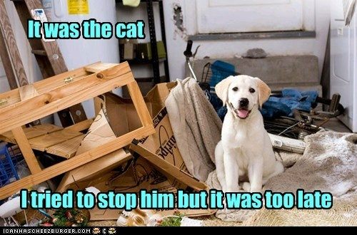 funny dog pictures - I Has A Hotdog: It was too late...
