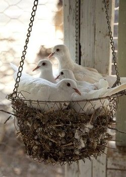 I would love a basket like this