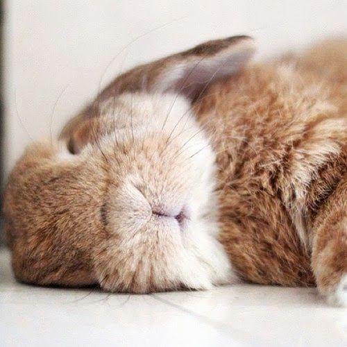 Sssshhh sleeping bunny//