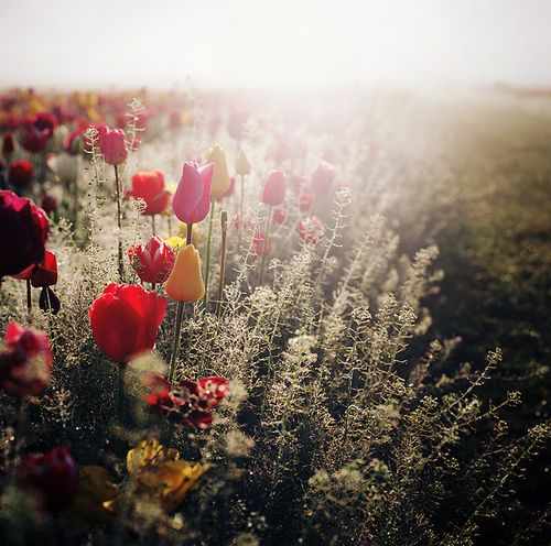 by the the light of a new day by manyfires on Flickr.
