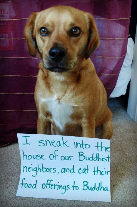 Dog Shaming - I sneak into our neighbor's house...
