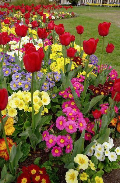spring flower garden ideas Spring Flower Garden Ideas | garden ideas | Pinterest