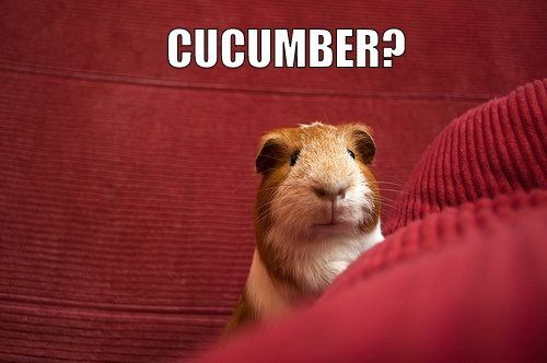 "Did somebody say ""cucumber""?"