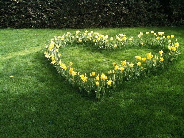 Narcissus heart
