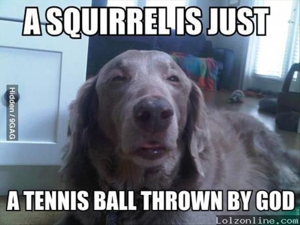 funny animal pictures (33)