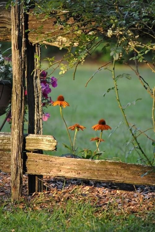 Old Fence and fresh Flowers