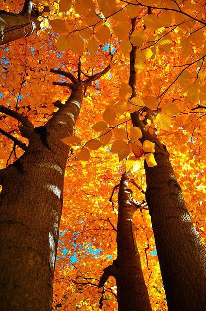 Fall splendor .:.  image credit:  http://www.flickr.com/photos/mihirnmehta/4048324959/ .:. .:. #Ambit #Orange #Autumn http://Snow.EnergyGoldRush.com