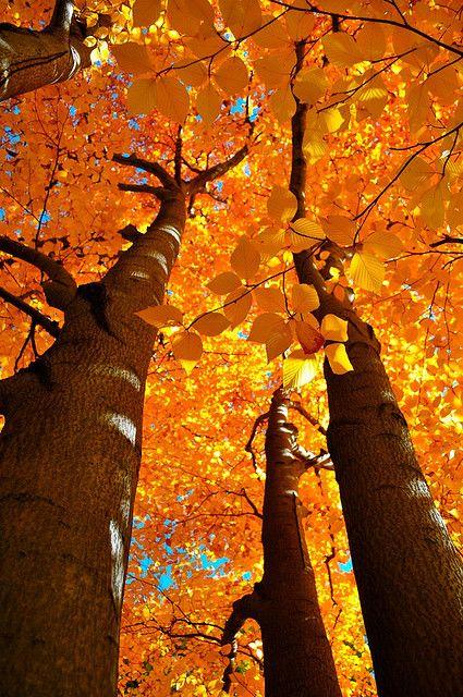 Fall splendor .:.  image credit:  http://www.flickr.com/photos/mihirnmehta/4048324959/ .:. .:. #Ambit #Orange #Autumn http://Snow.EnergyGoldRush.com