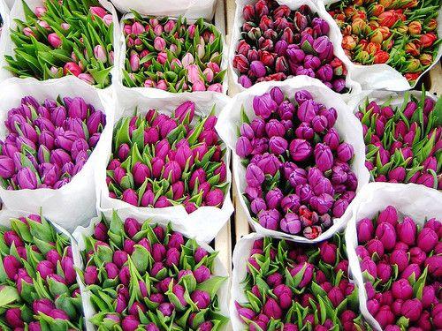 Http://www.glamourmarmalade.com/ Tulipani