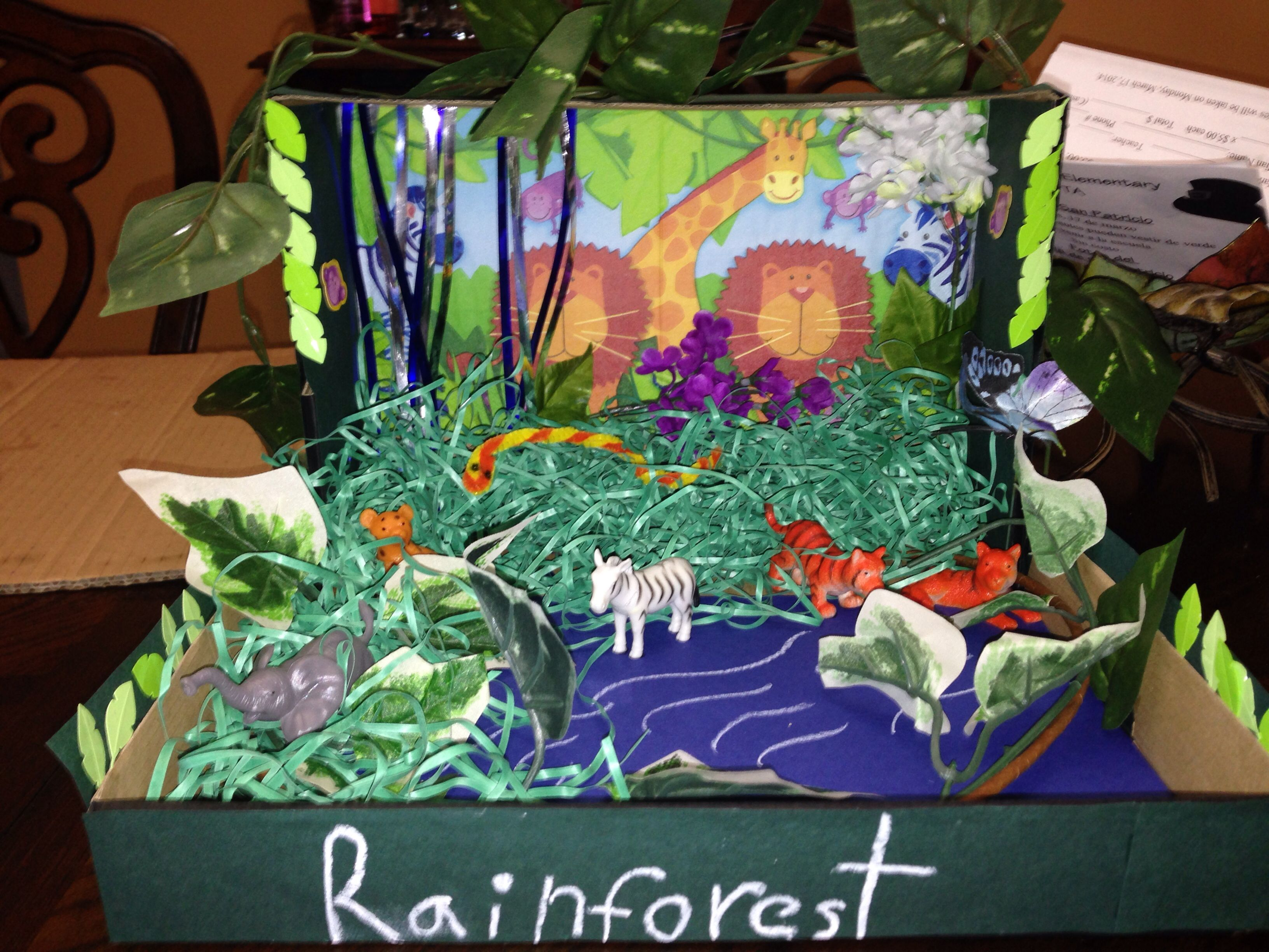 Rainforest Rainforest Habitat