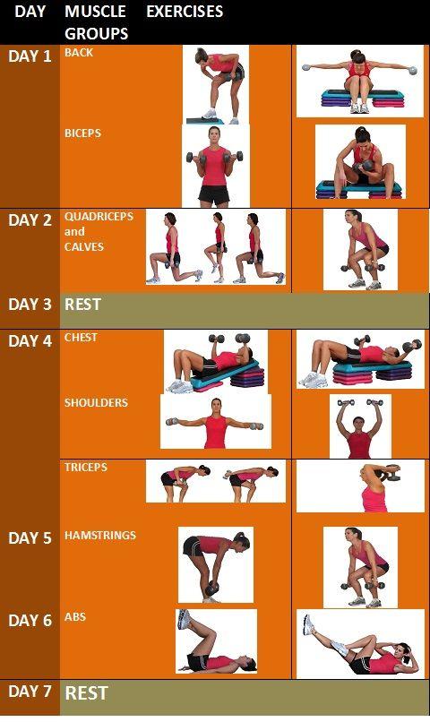 Weekly Weight Training Schedule   Workout   Pinterest