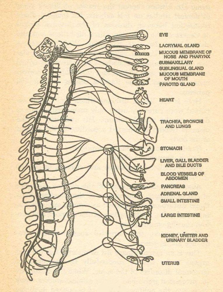 Chiropractic Diagram