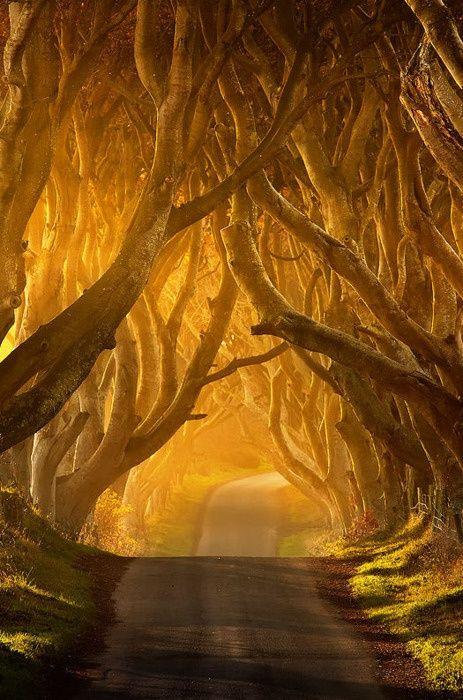 Il Hedges Scuro, Antrim, Irlanda