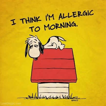 allergic to morning funny quotes quote snoopy funny quote funny quotes