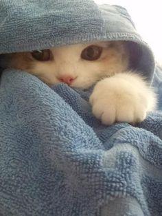 Kitty Hood #cutekitties