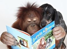 Two Pals Doing a Little Reading!   ♥