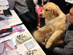 """Rocky and Steve, pair programming. Those input devices are Data Paws, with which Rocky can type upwards of 35wpm. (It's nothing but """"woof, woof, woof,"""" of course, but it's still pretty cool.)"""