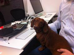 Guster, IOS developer.