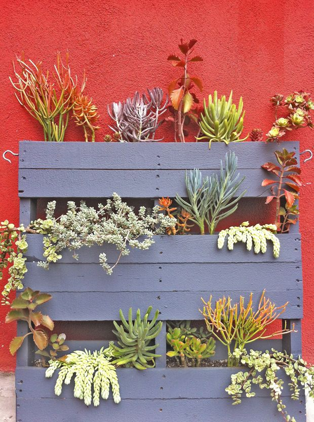 Upcycled Pallet Persuasion: Pallet succulent garden at Guisados in Silverlake, Los Angeles   Photo by Justina Blakeney