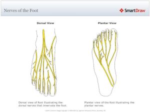 Nerves of the Foot   Fodterapeut   Pinterest