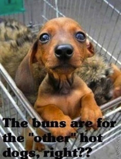 Funny dogs, funny dog pictures, funny dog quotes, humor dogs, hilarious dogs ...For more funny animal pics and hilarious animal memes visit www.bestfunnyjokes4u.com/lol-funny-cat-pic/ | FOLLOW ME @ www.Pinterest.com/ForevermadeUSA