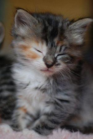 So sweet! It's time for my nap.  #kitten #cat