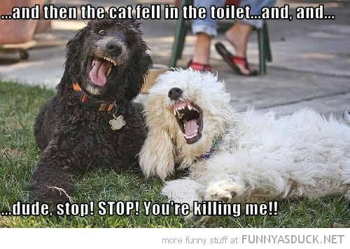 Dogs laughing at cat jokes