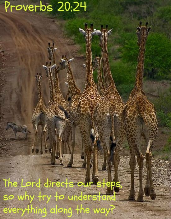 Proverbs 20:24 The Lord directs our steps,     so why try to understand everything along the way?