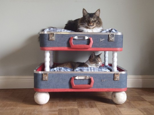 Suitcases and cats