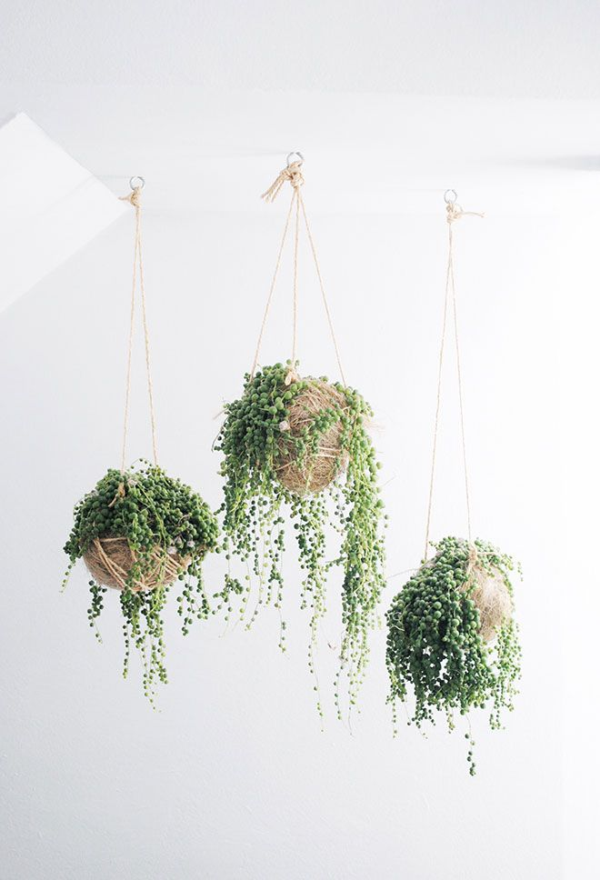 Inspiration / Ceiling of Greenery - Pistols Republic - Interior & Lifestyle