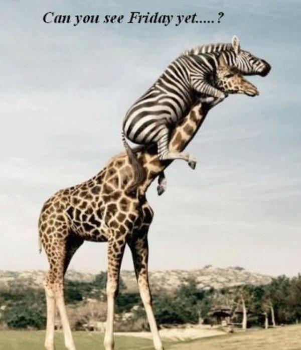 Its Almost Friday Pictures | It's Almost Friday, I Hope... | Aminals :)